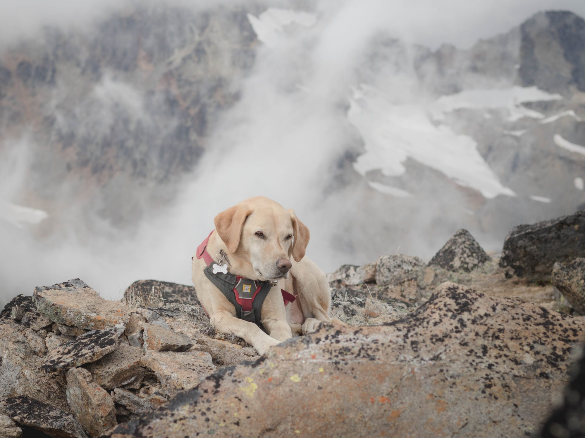 Summit dogs on Corteo Peak