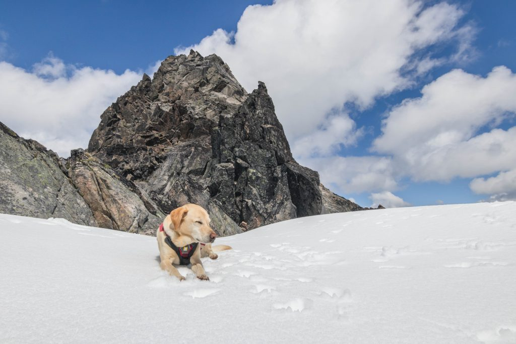 Summit dogs on Spire Point