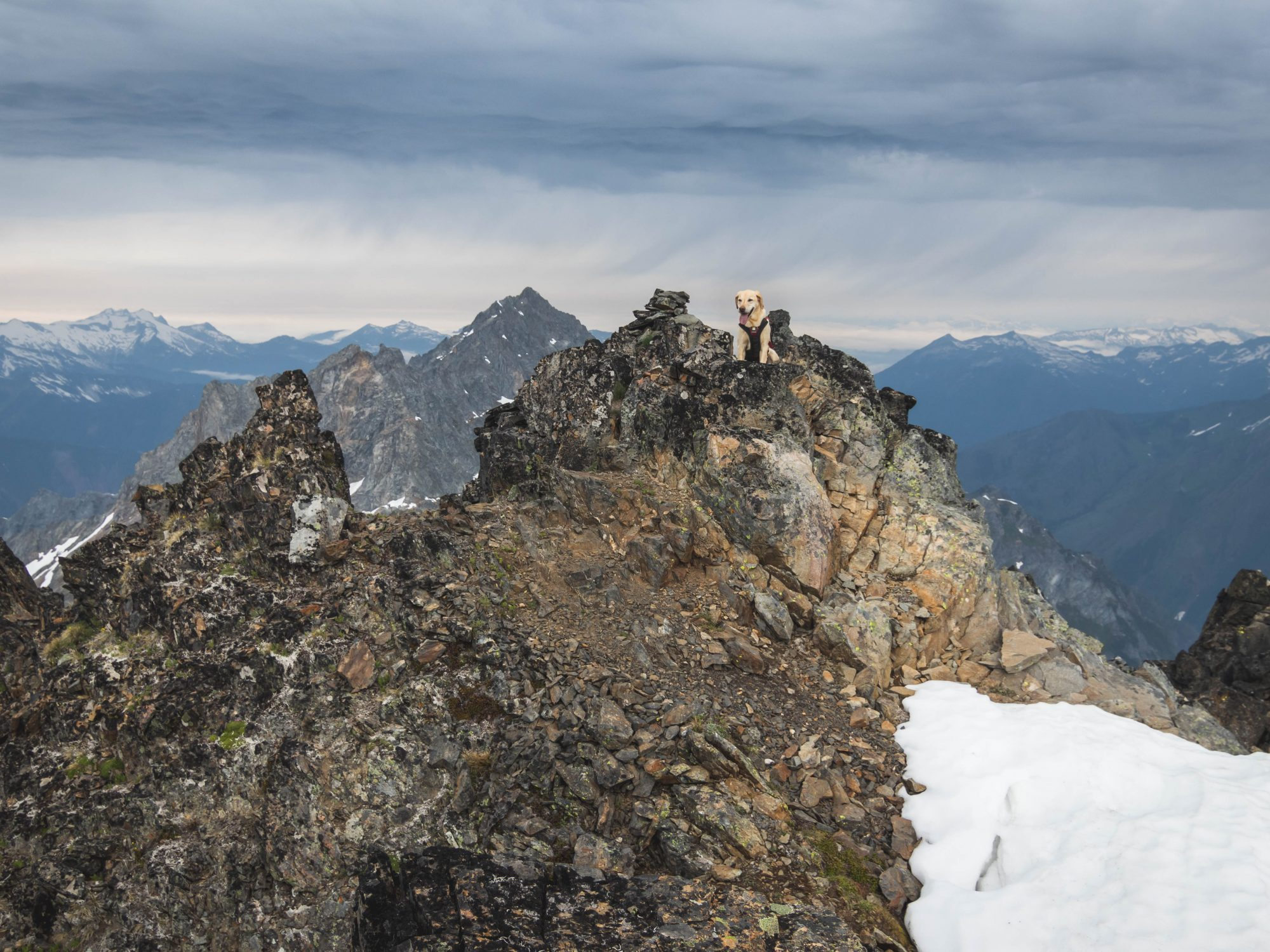 Summit dogs on Spider Mountain
