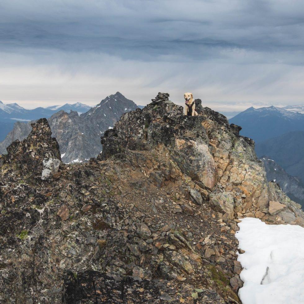 Summit dogs on Spider Mountain