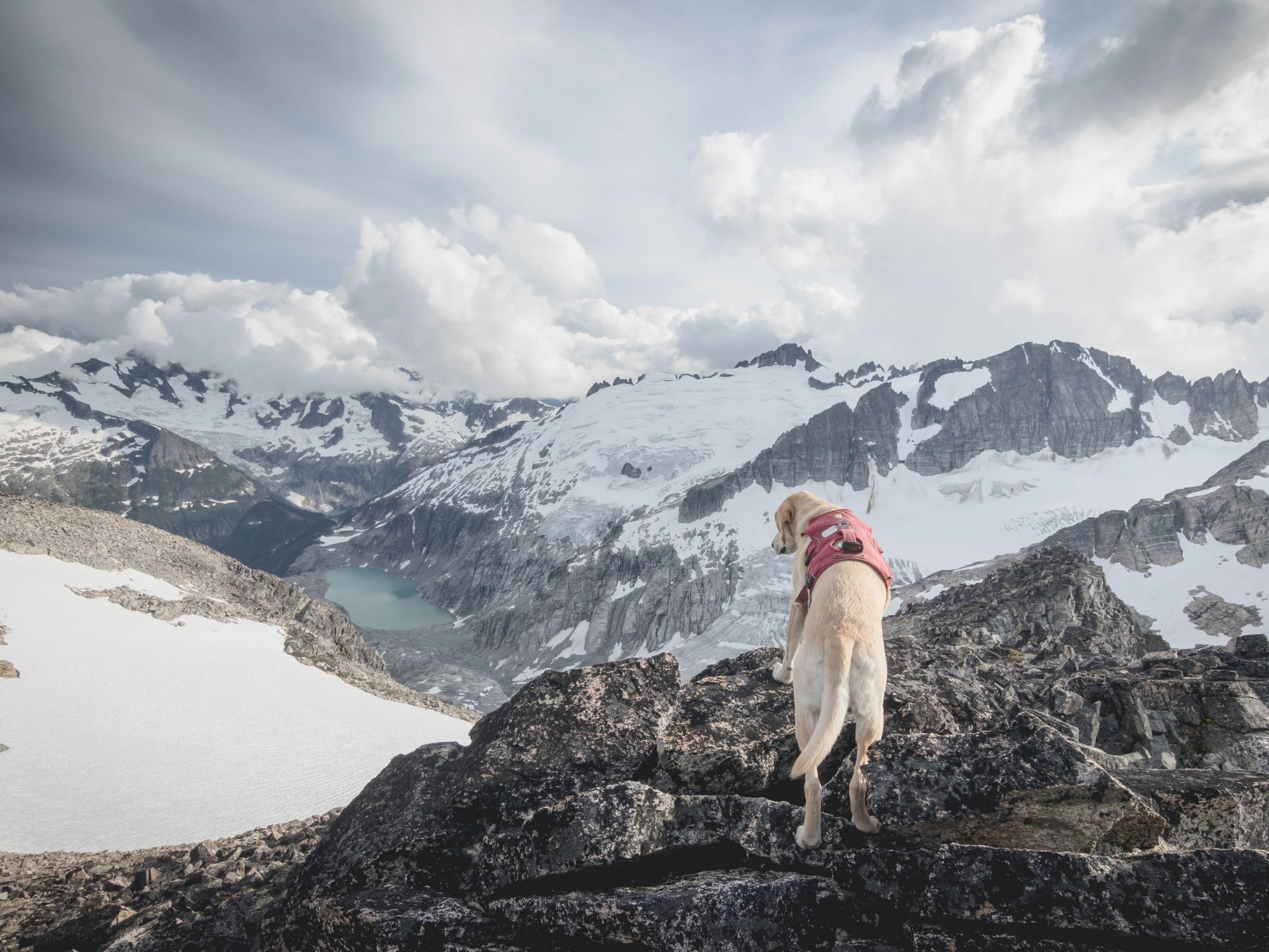 Summit dogs on Tricouni Peak