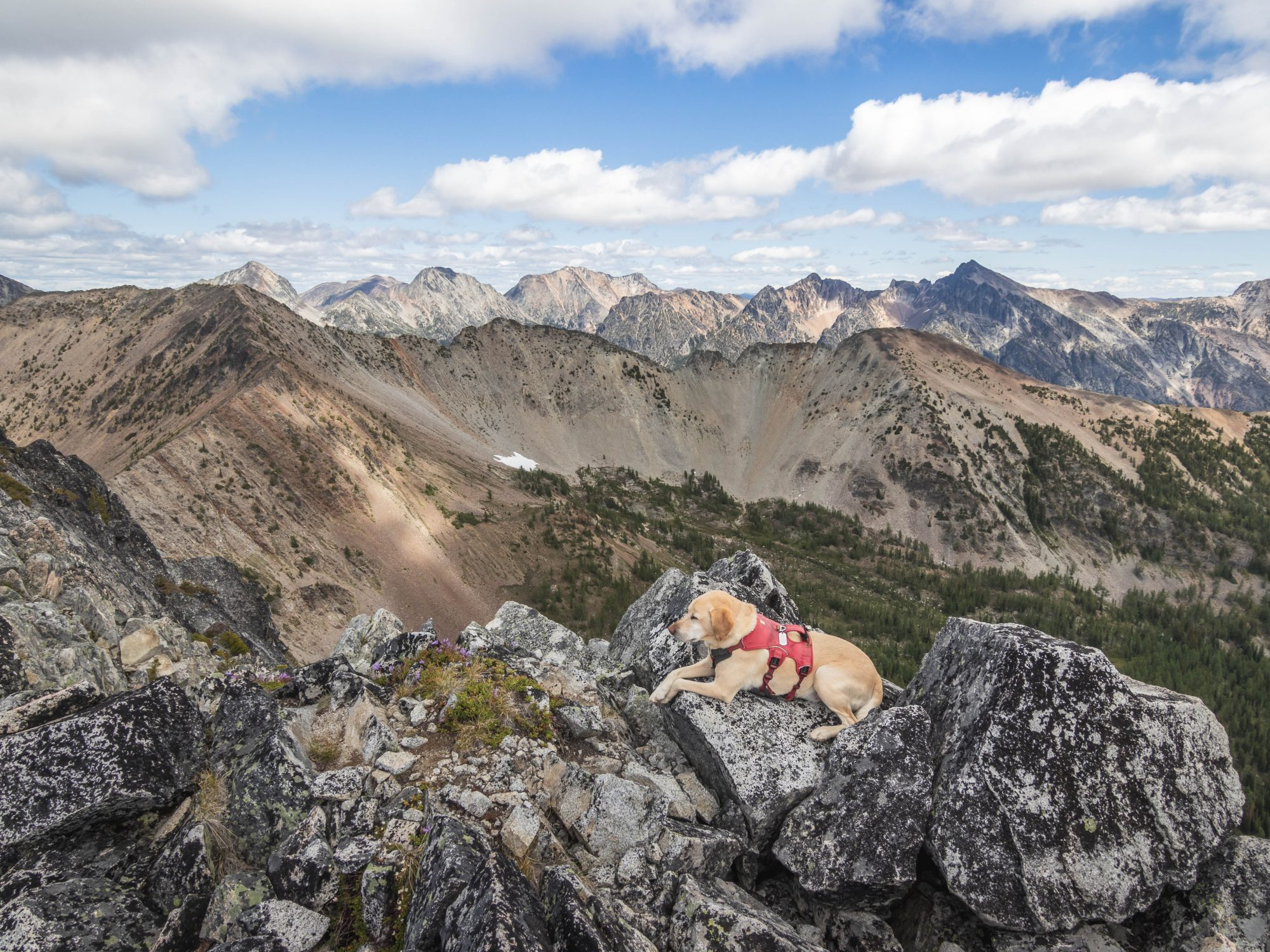 Summit dogs on Wildcat Mountain