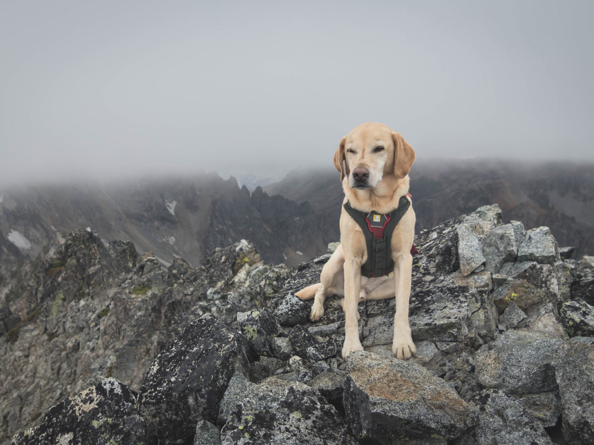 Summit dogs on Bearcat Ridge