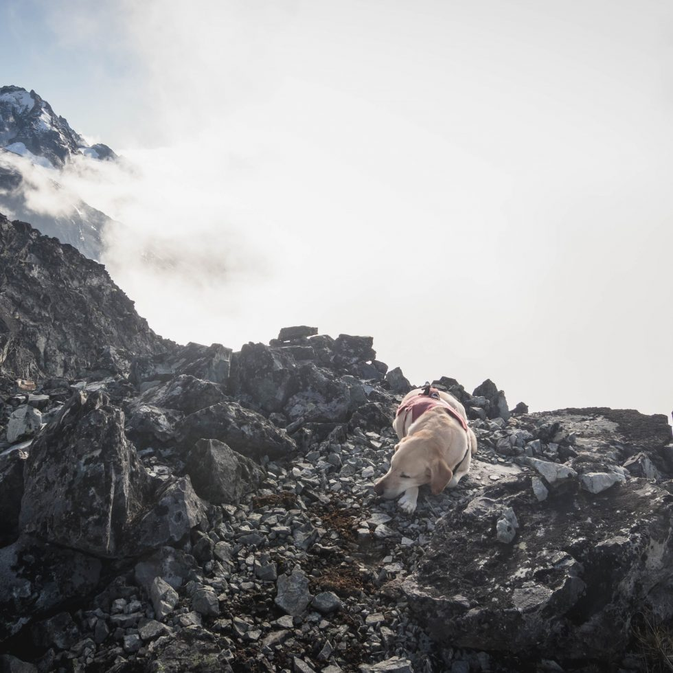 Summit dogs on Devils Tongue