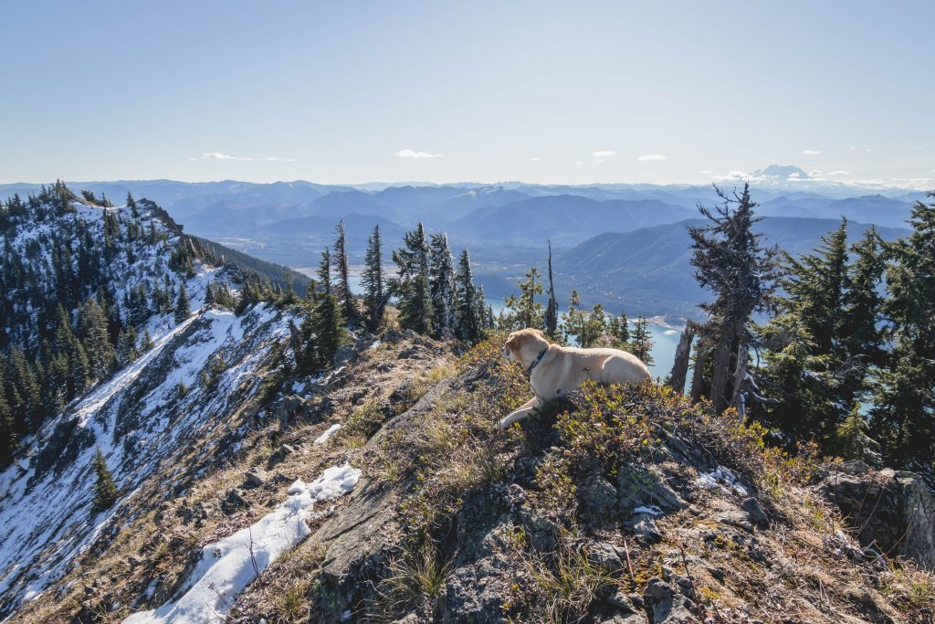 Summit dogs on Kachess Ridge