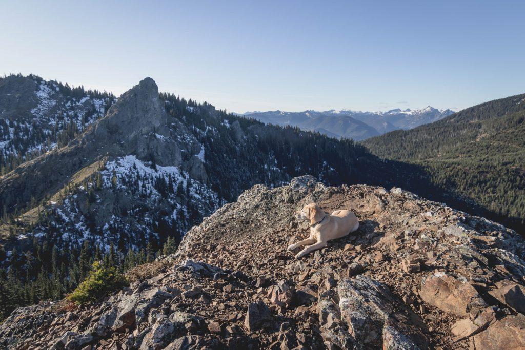 Summit dogs on French Chin