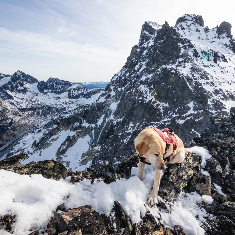 Summit dogs on Mad Eagle Peak