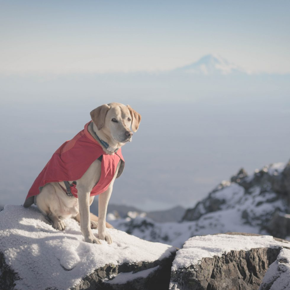 Summit dogs on The Brothers