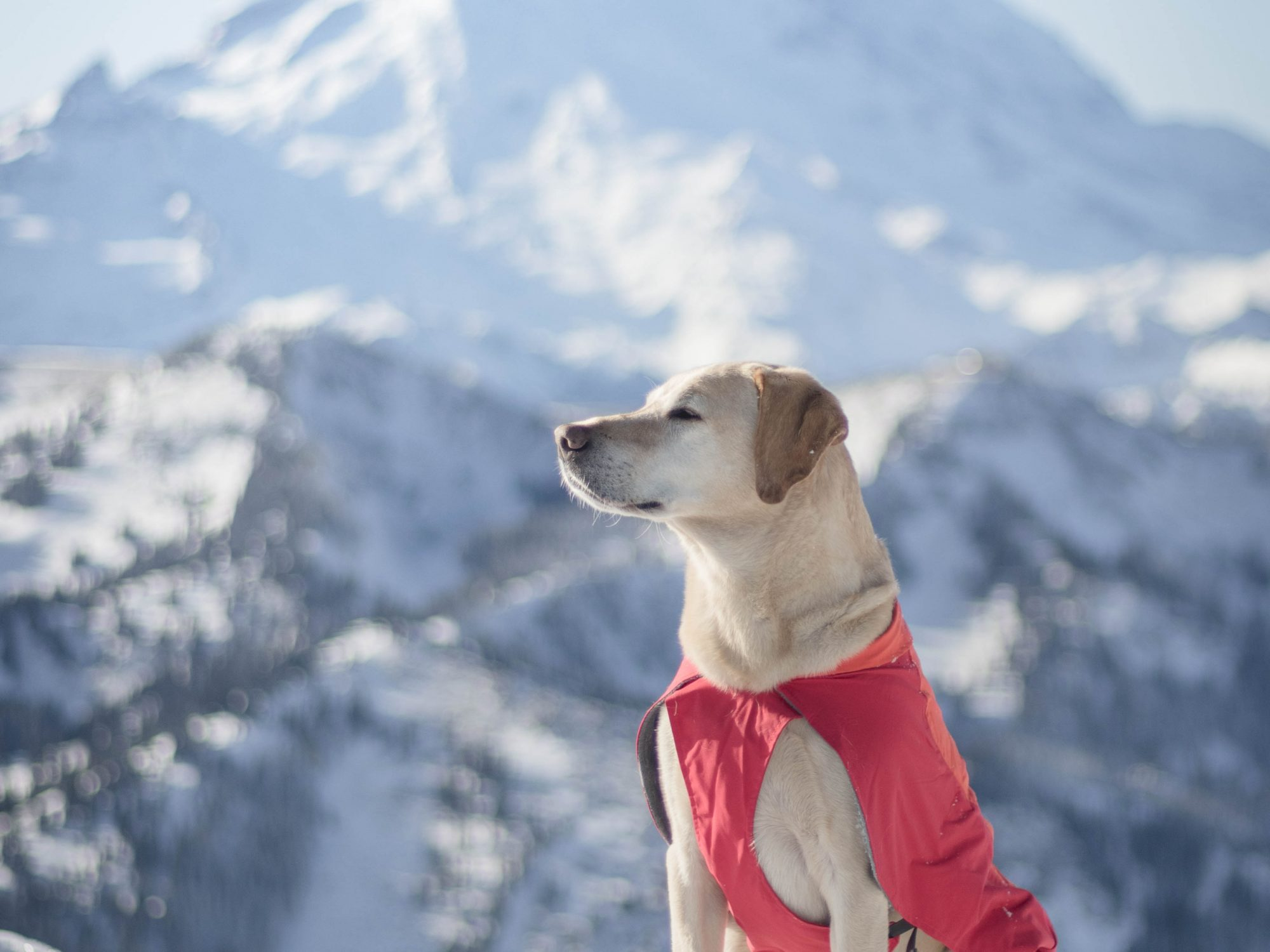Summit dogs on Norse Peak