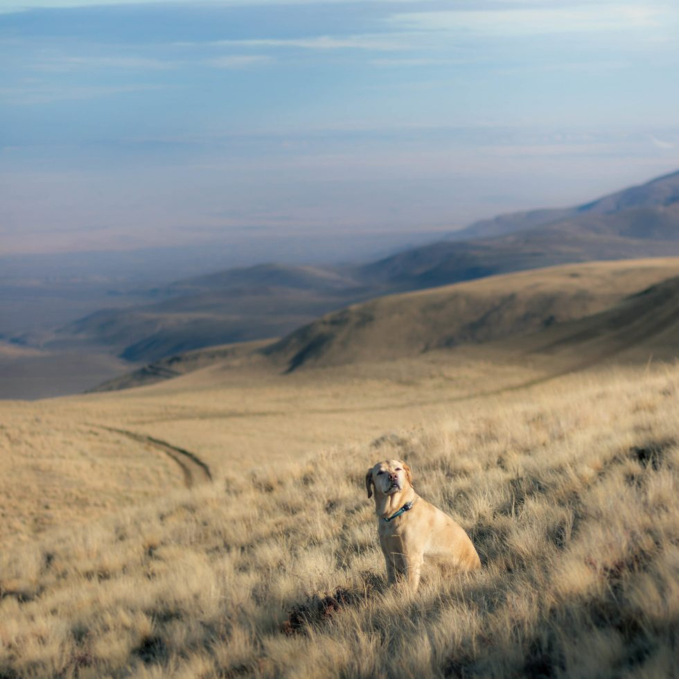 Desert dogs on Rattlesnake Hills Lookout