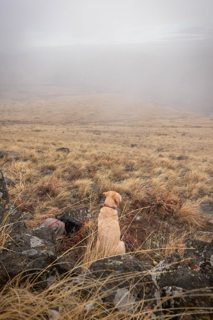 Desert dogs on Gracie Point