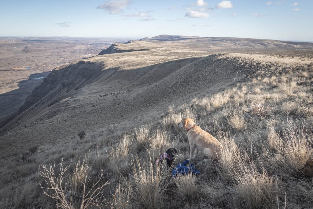 Desert dogs on Sentinel Mountain
