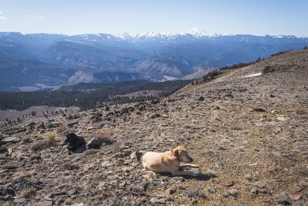 Summit dogs on Cleman Mountain