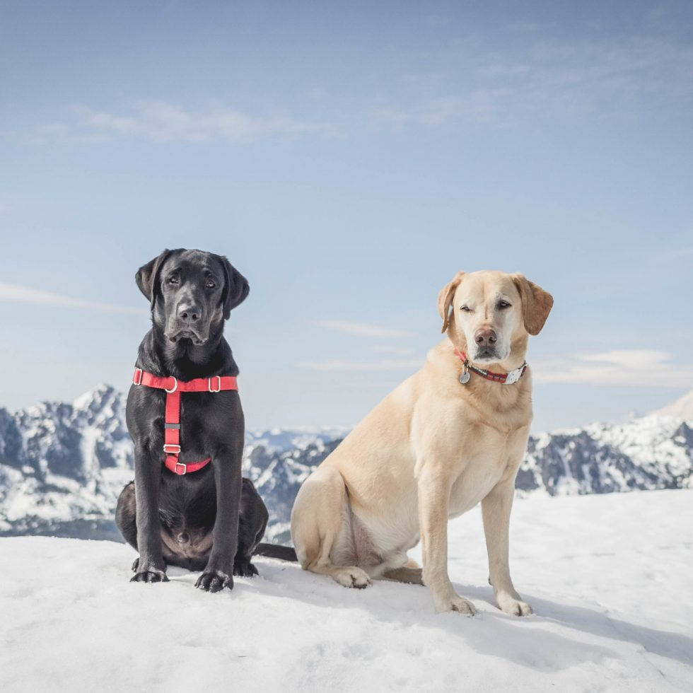 Summit dogs on Fools Day Peak