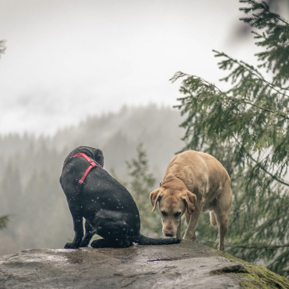 Summit dogs on Chuckanut Mountain North