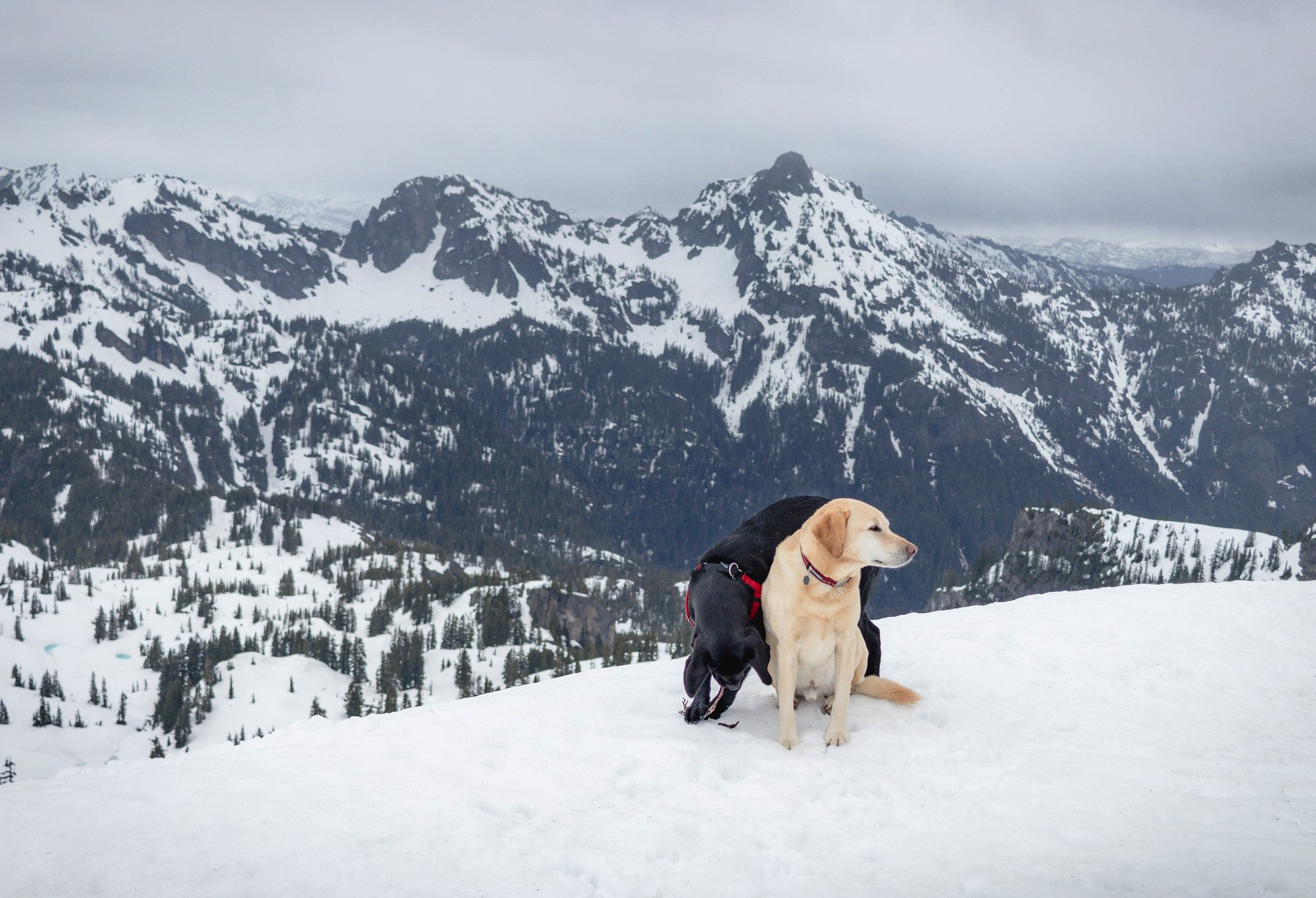 Summit dogs on Rampart Ridge