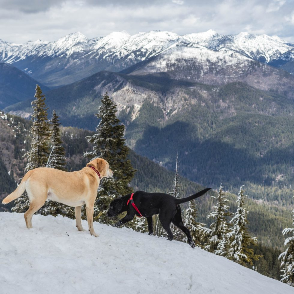 Summit dogs on Catkin Peak