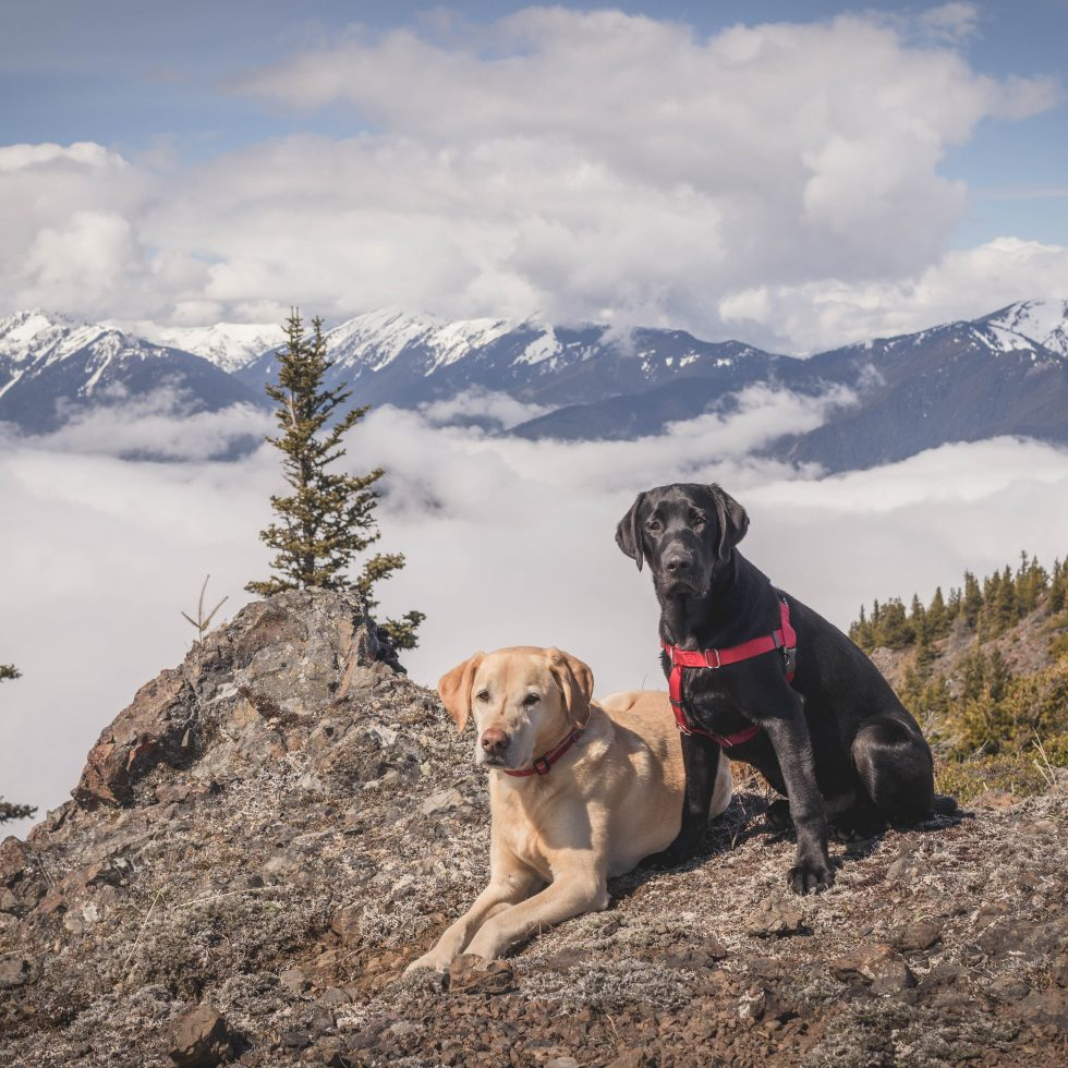 Summit dogs on Maynard Peak