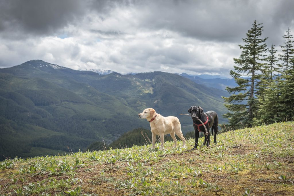 Summit dogs on Dandy Peak