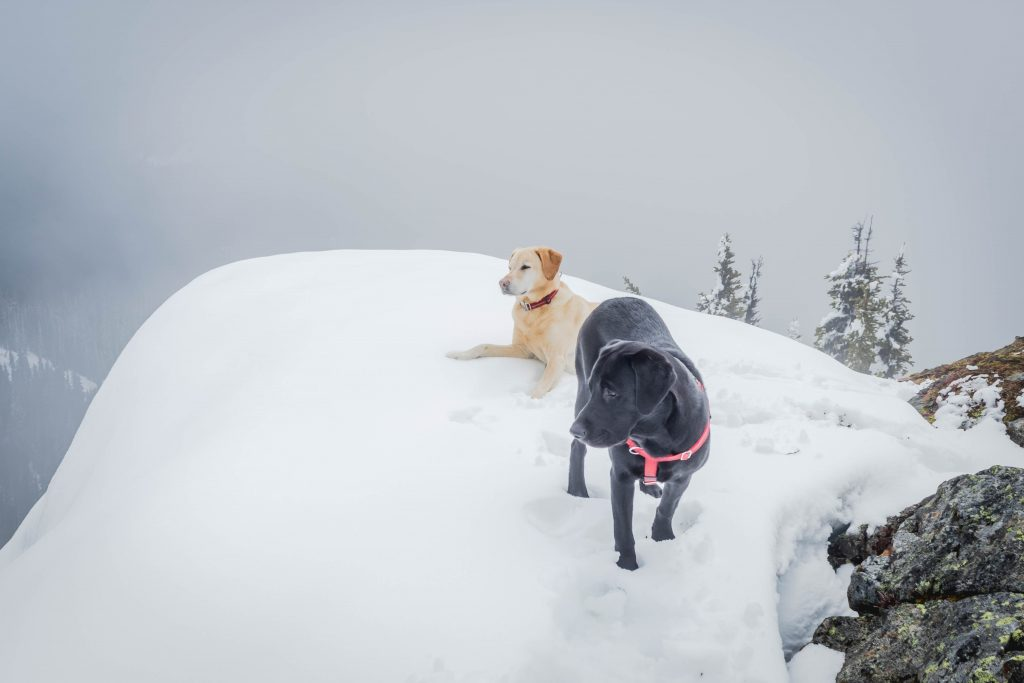 Summit dogs on Nasikelt Peak