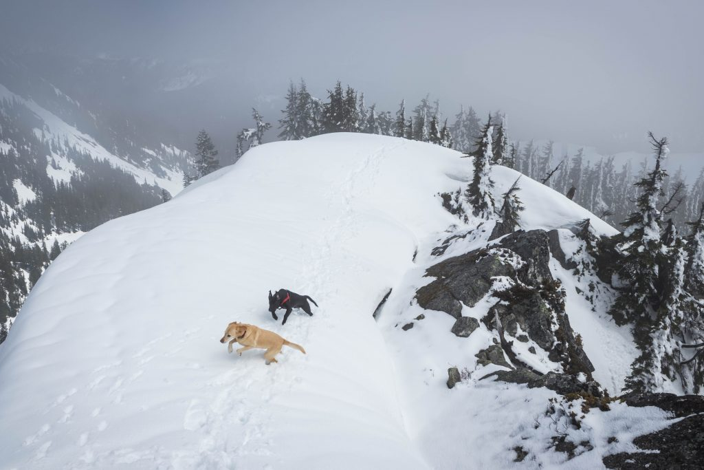Summit dogs on Lumiere Ridge