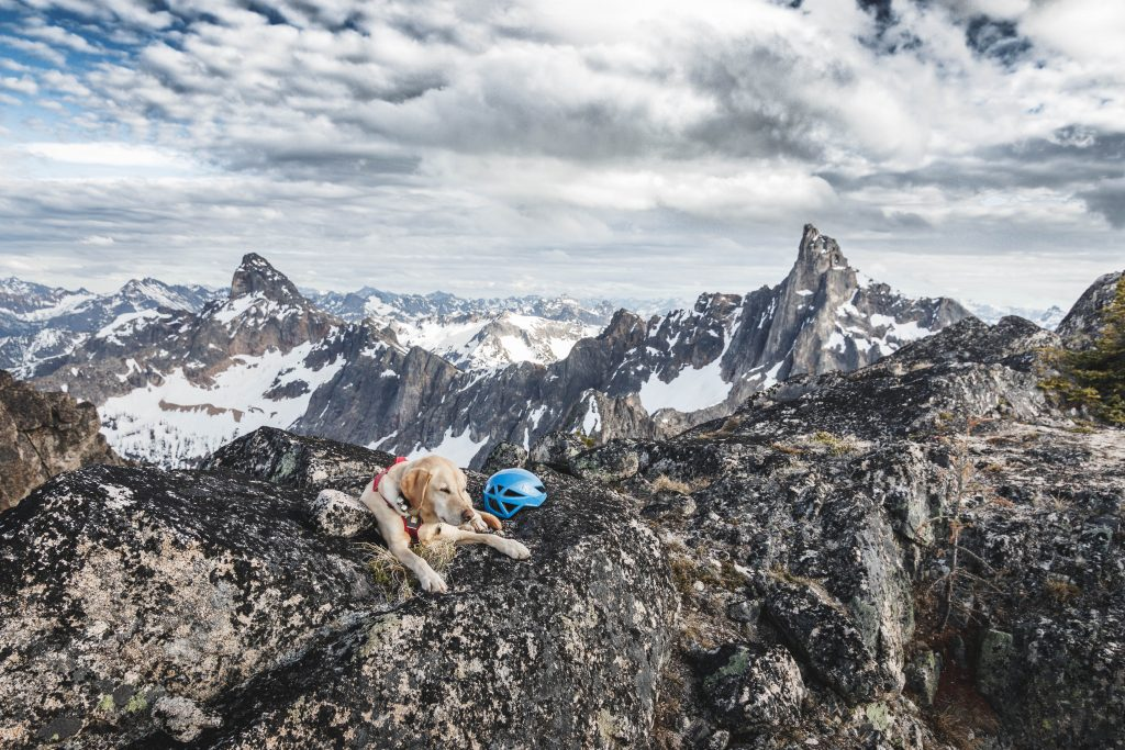 Summit dogs on Holliway Mountain
