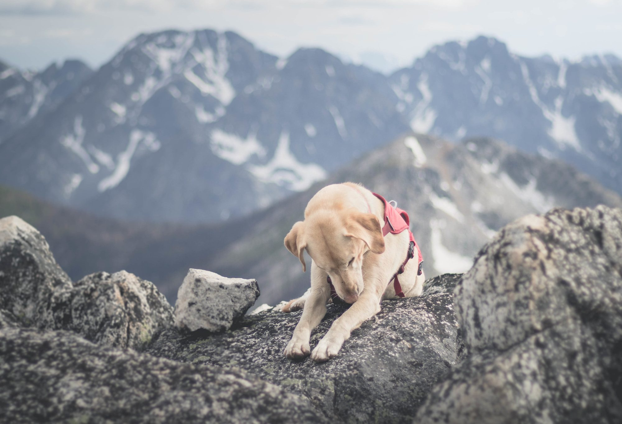 Summit dogs on Fools Hen Southeast