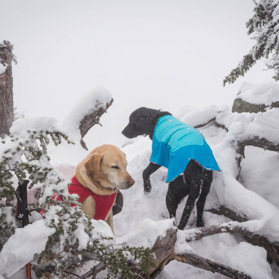 Summit dogs on Alaska Mountain