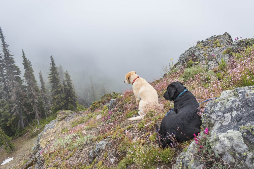 Summit dogs on Ugly Duckling