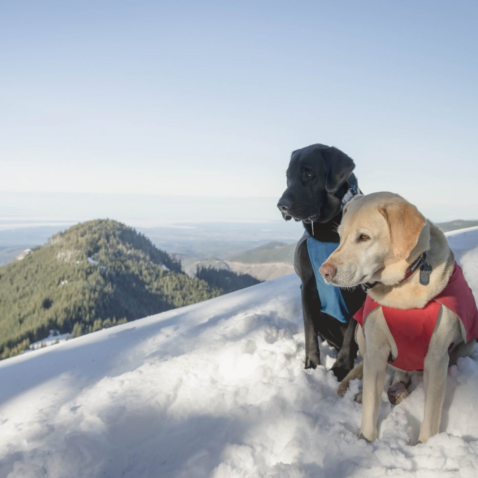 Summit dogs on Poch Peak