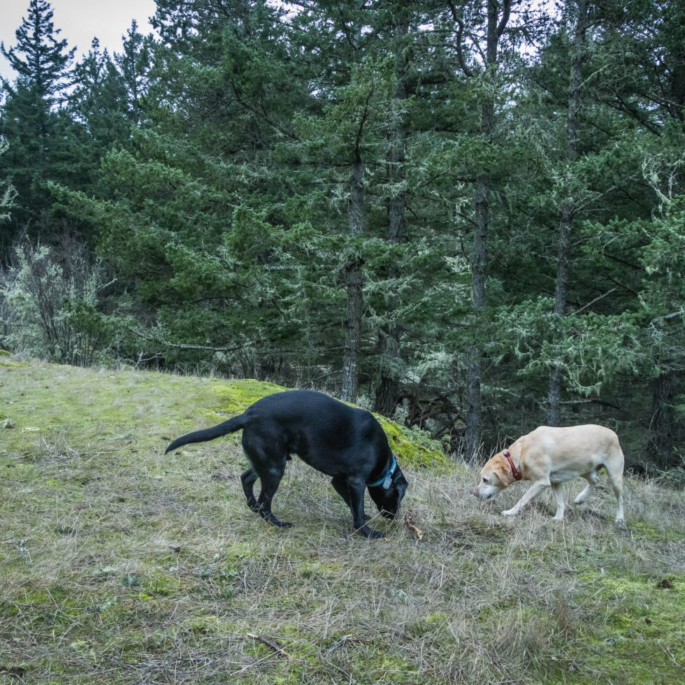 Summit dogs on Lopez Hill