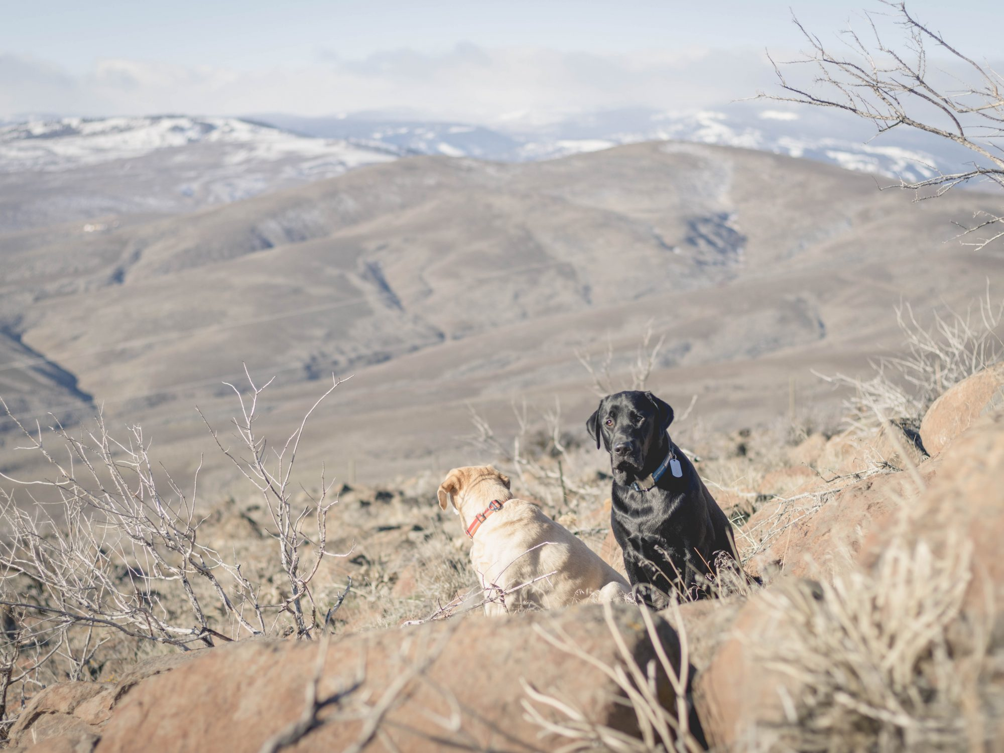 Desert dogs on Cowiche Mountain East Peak