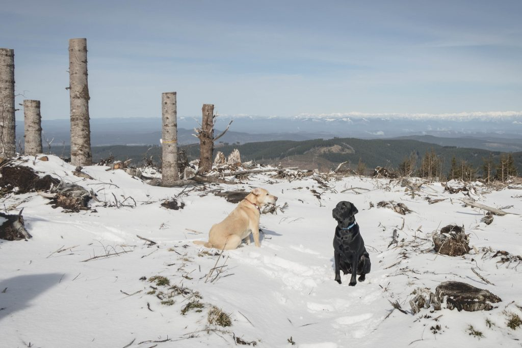 Summit dogs on Larch Mountain