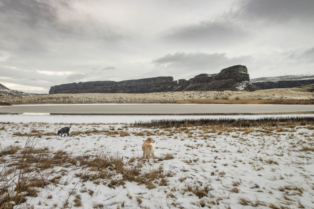 Desert dogs in Monument Coulee