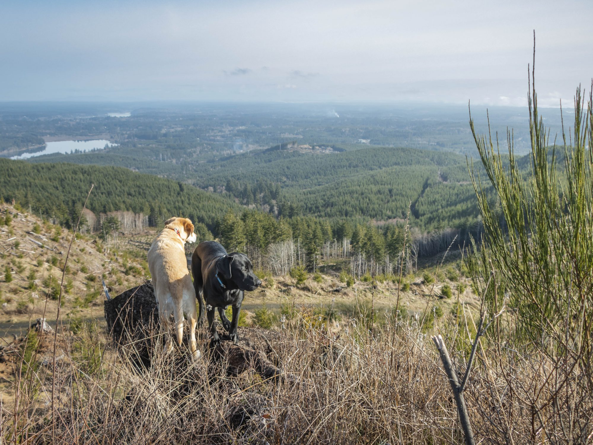 Summit dogs on Kamilche Hill