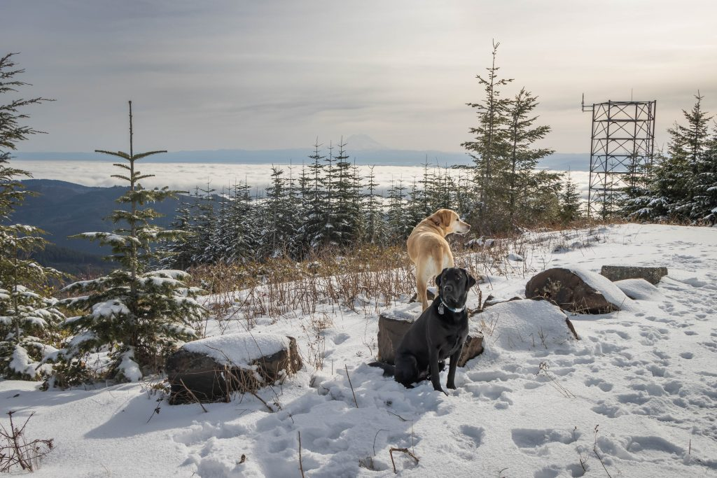 Summit dogs on Capitol Peak