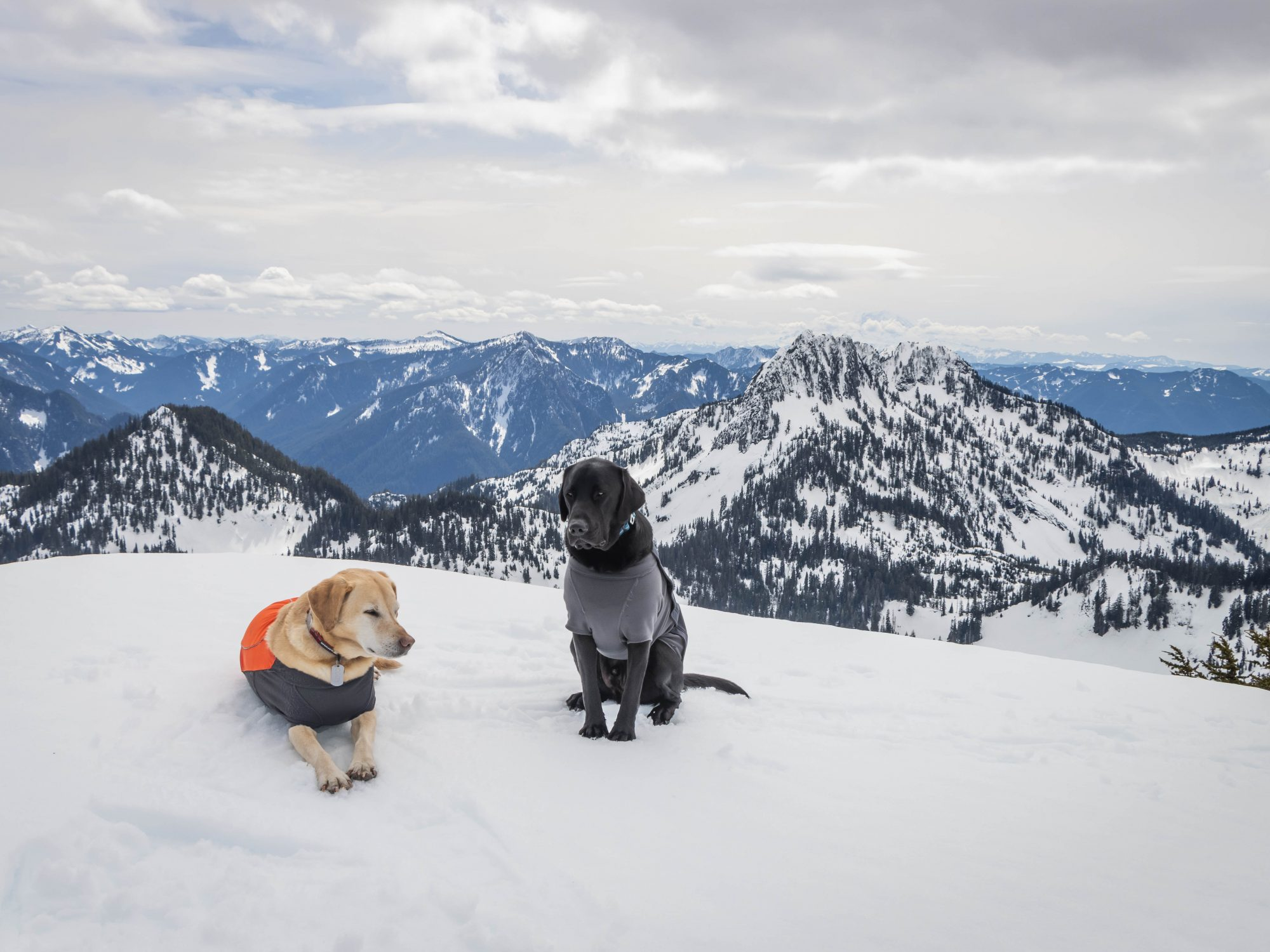 Summit dogs on Paperboy