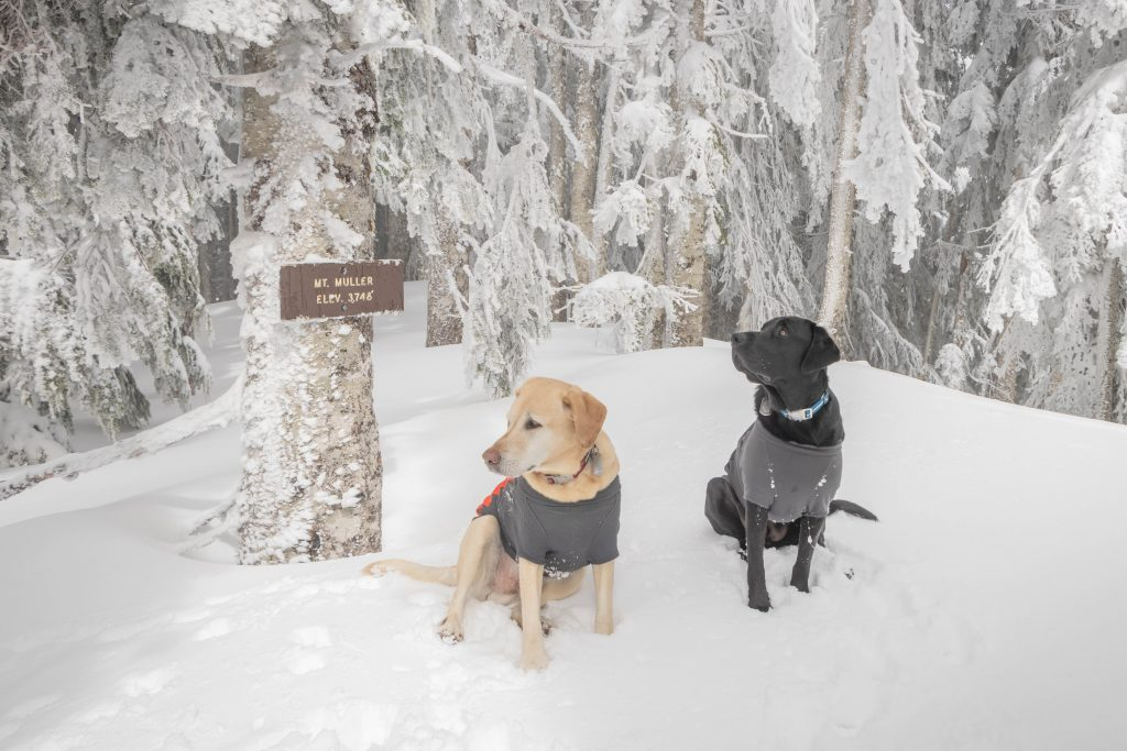 Summit dogs on Mount Muller